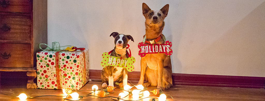 How To Make Christmas Dog Bone Photo Props Diy